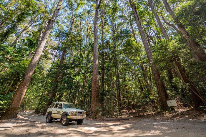 4WD, Fraser Island