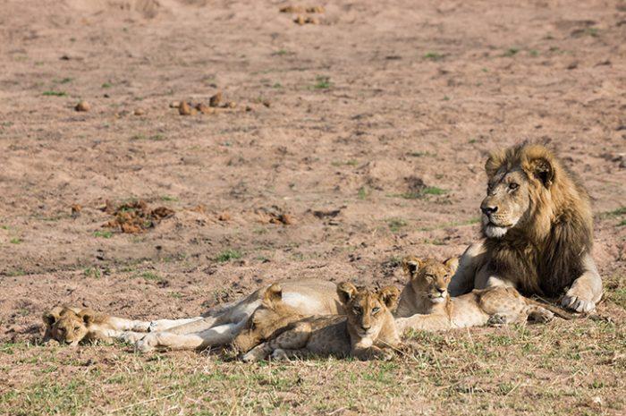 Lions Jongomero