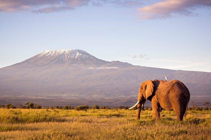 Amboseli Kilimanjaro KENYA Africa