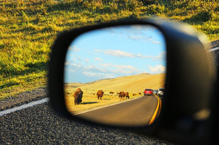 Reflection Of Animals in The Mirror