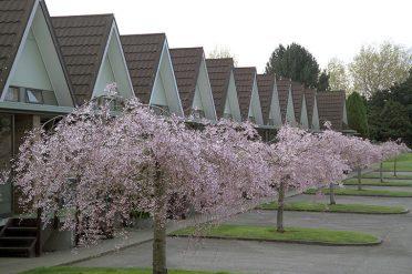 Ascot Park Hotel Gardens