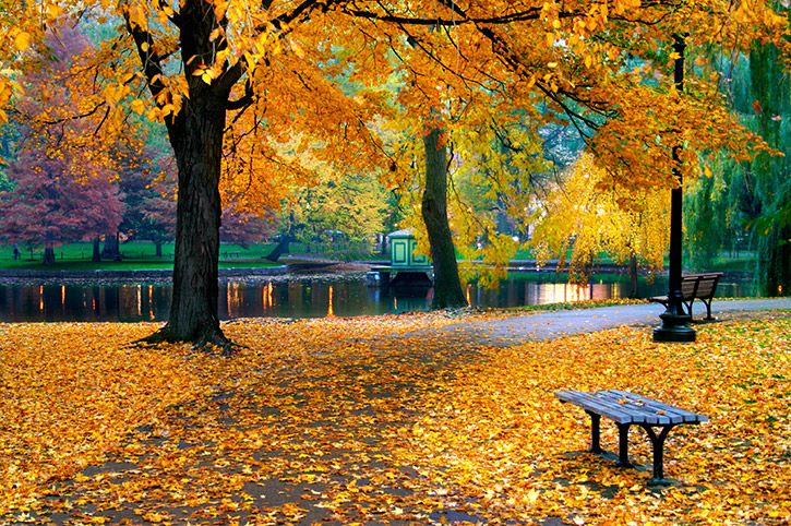 Autumn in Boston Public Garden