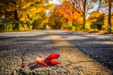 Autumn Road in Canada