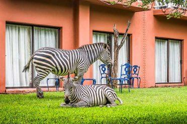 Avani Victoria Falls Resort Local Wildlife