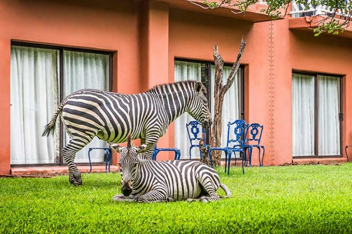 Avani Victoria Falls Resort Local Wildlife