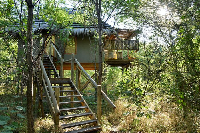 Bakwena Lodge Treetop Chalet