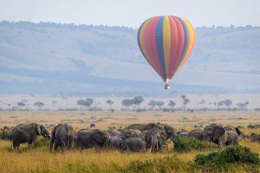 Balloon Safari elephants