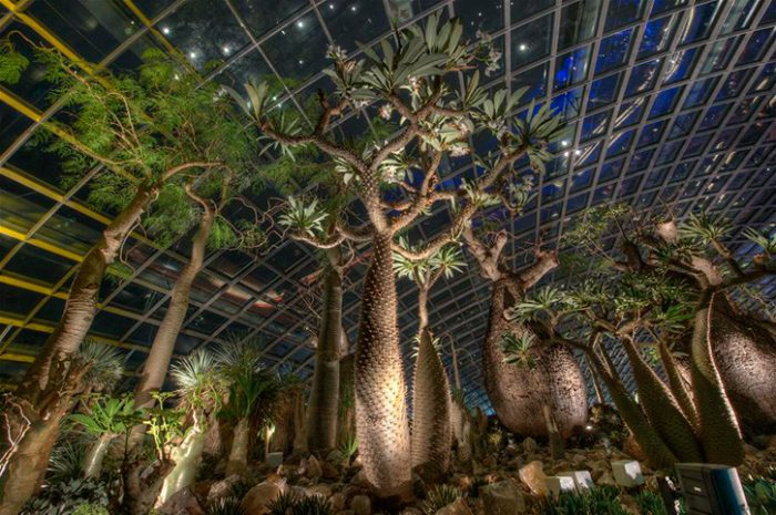 Baobabs, Gardens By The Bay