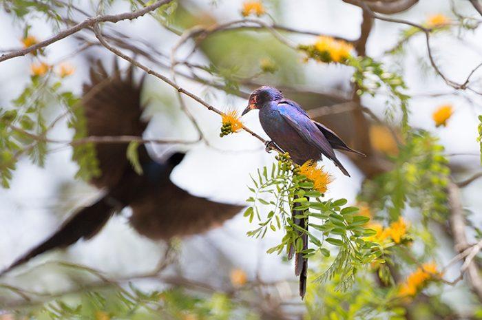 Birds, Zimbabwe