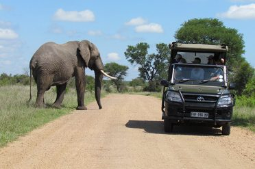 Blue Train elephant on game drive