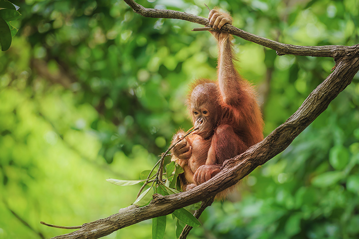 Asia's Top 5 Wildlife Experiences