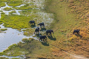 Elephants, Botswana