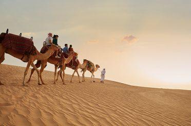 Camels, Dubai Desert