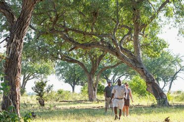 Camp Okavango Bush Walk