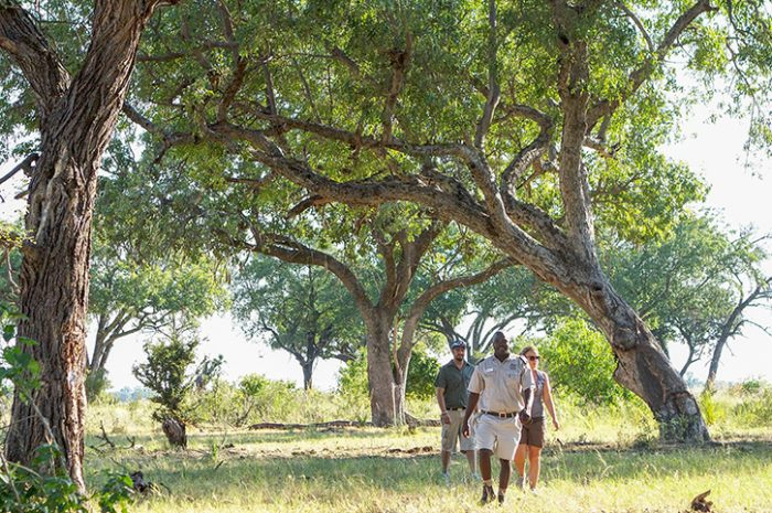 Camp Okavango Bush Walk