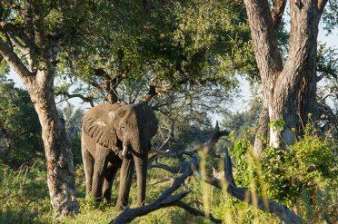 Camp Okavango Wildlife