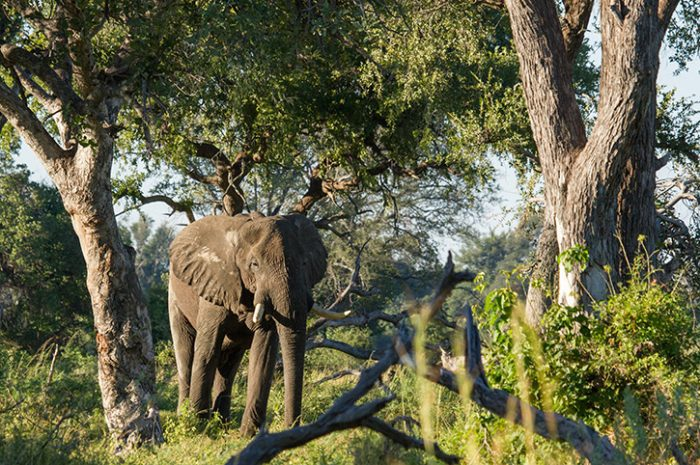 Camp Okavango Wildlife