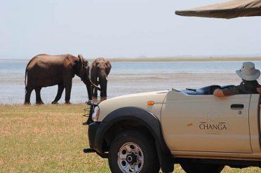 Changa Safari Camp Game Drive