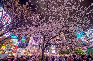 Shibuya Crossing, Toyko