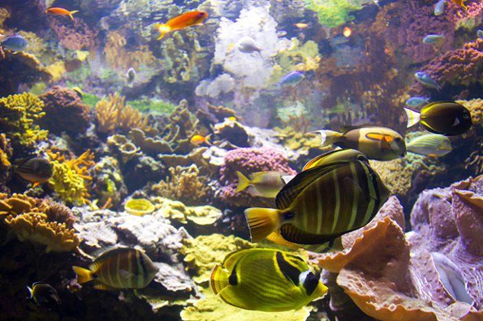 Shedd Aquarium, Chicago, USA