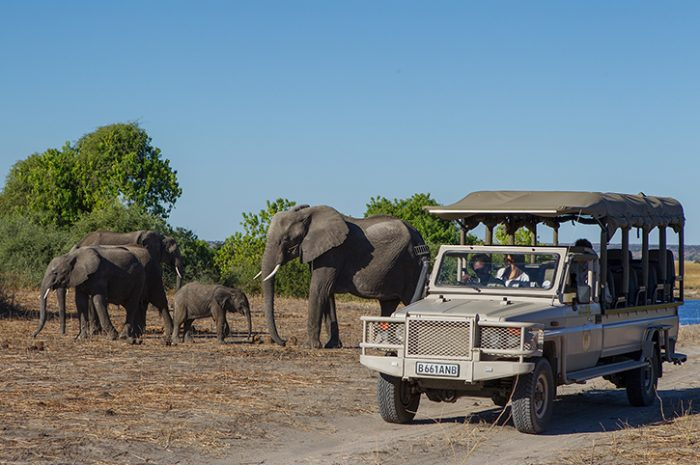 Chobe Game Lodge 4wd Safari