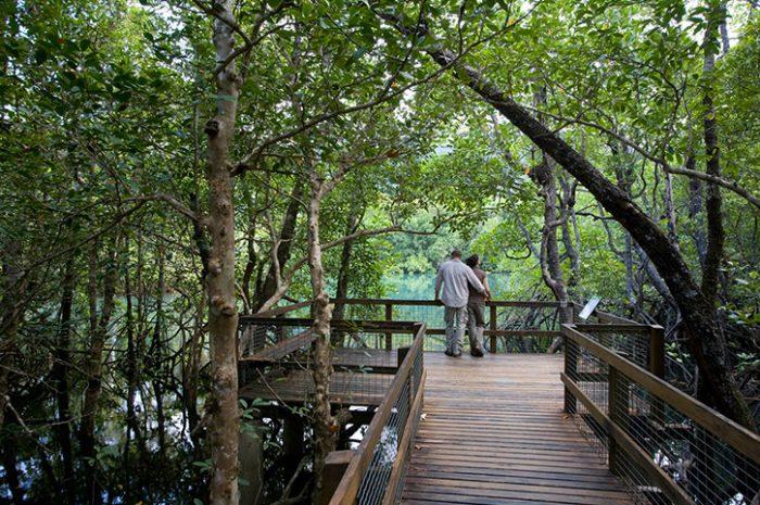 Daintree Rainforest, North Queensland