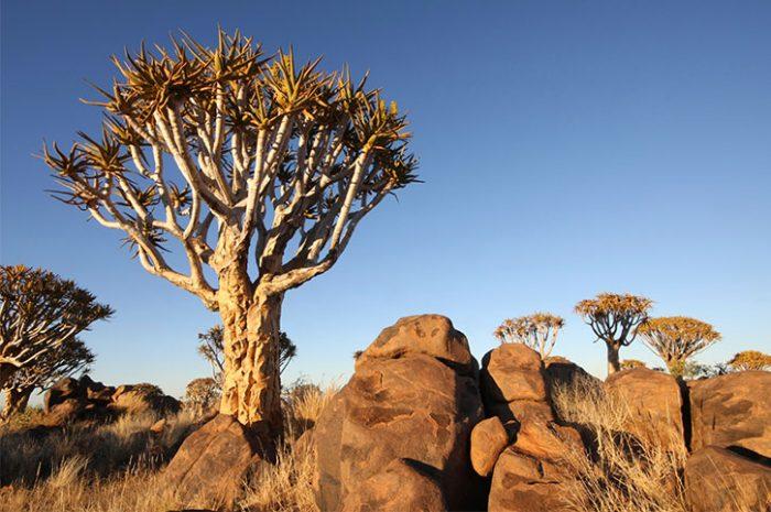 Desert scenery, Namibia