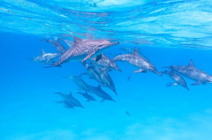 Dolphins, Zanzibar