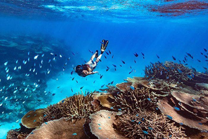Diving Orpheus