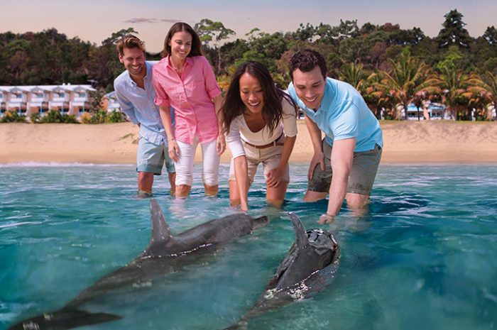 Dolphin Feeding, Tangalooma Resort, Queensland