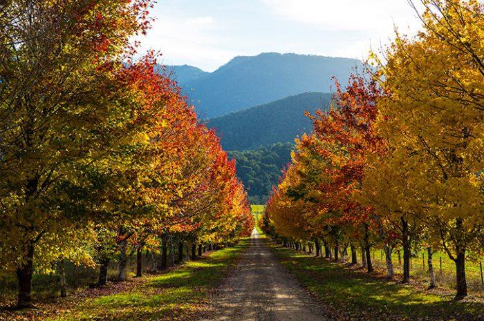 Driveway to Buckland Retreat
