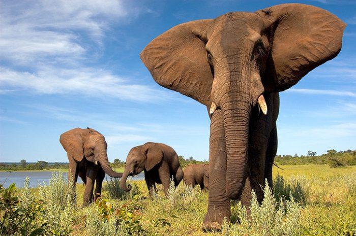 Wild Horizon Sanctuary, Zimbabwe