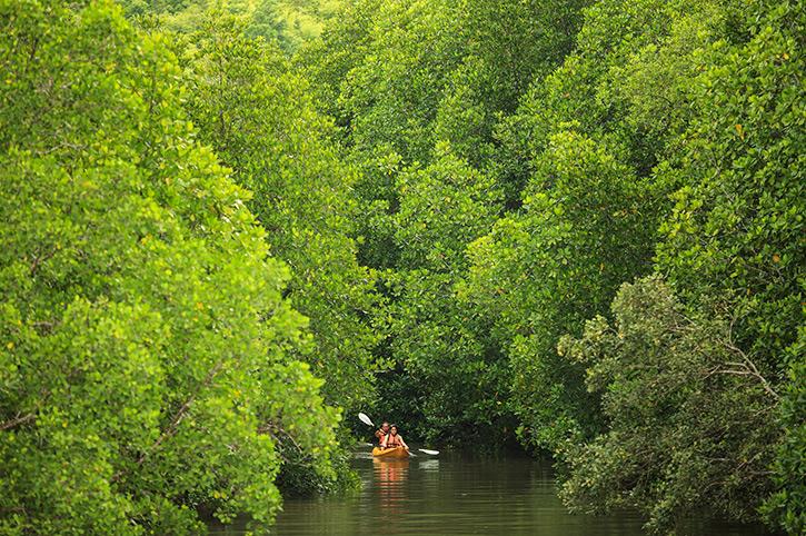 Elephant Hills Canoeing Tour