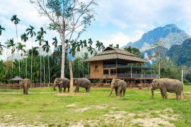 Elephant Hills Ethical Elephant Experience