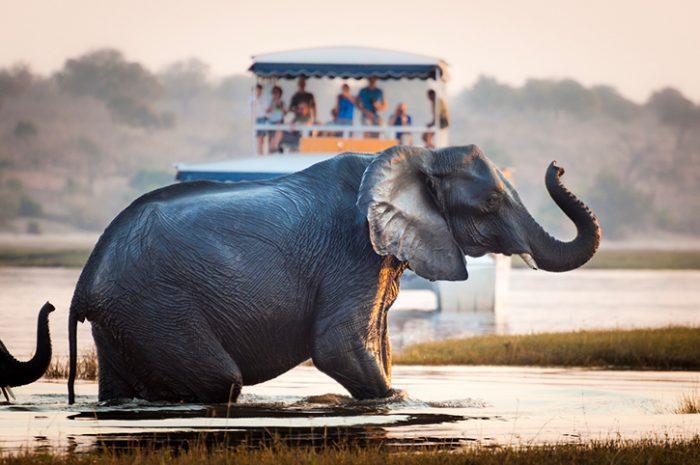 Elephant in Chobe National Park,Botswana