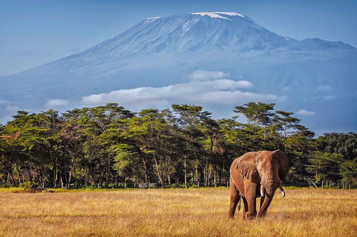Elephant with Mt. Kilimanjaro backdrop
