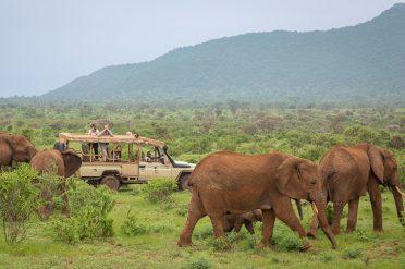 Elephant Bedroom game drive