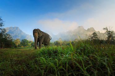Elephant Hills Elephant Experience