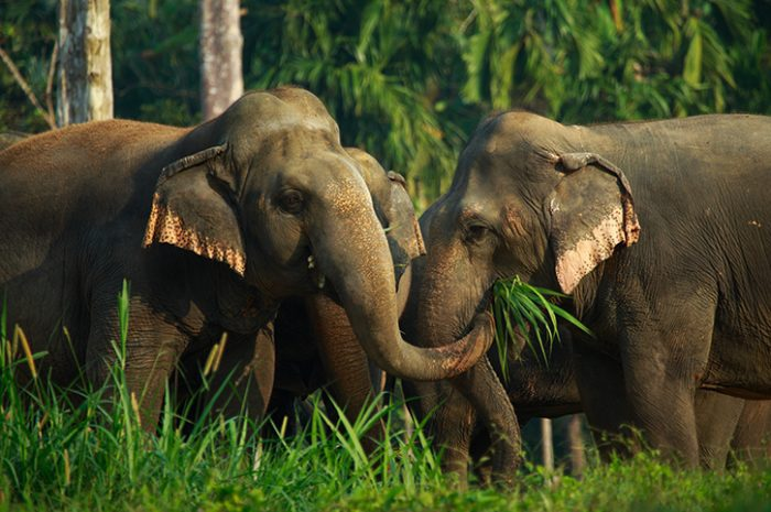 Rescued elephants, Elephant Hills