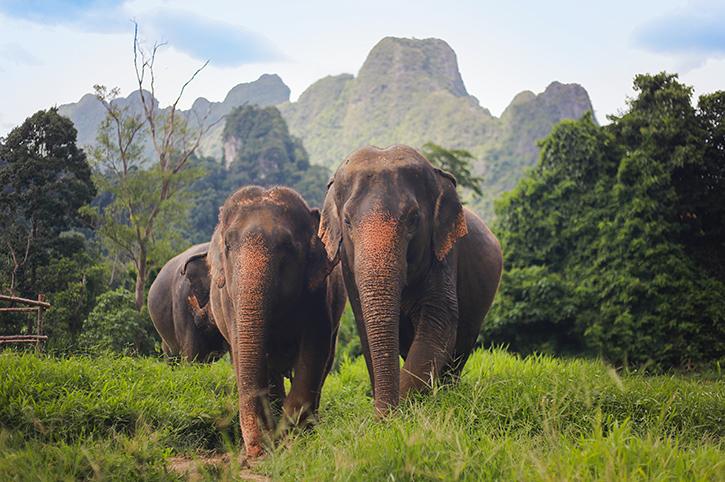 Elephants at Elephant Hills