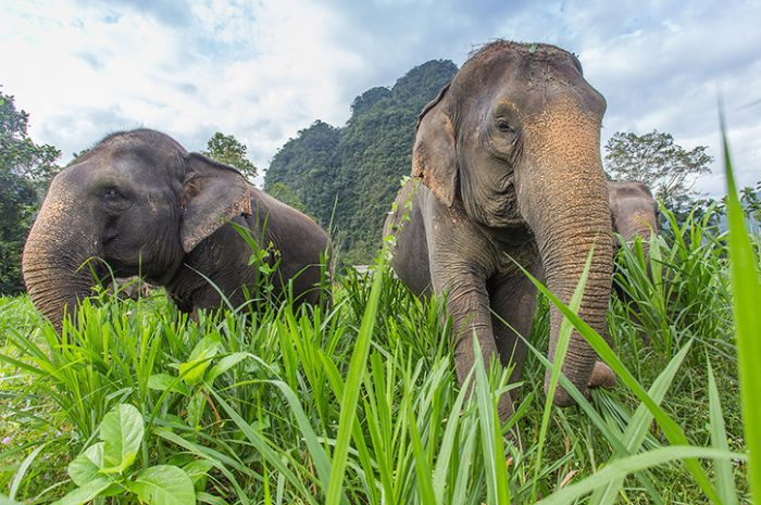 Elephants in Elephant Hills