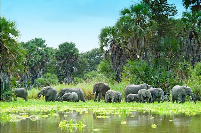 Elephants in Selous