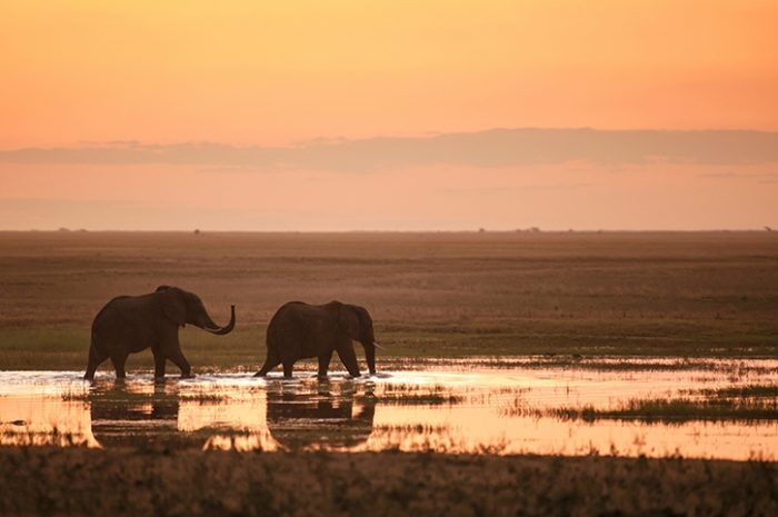 Elephants in Hwange National Park, Zimbabwe.jpg