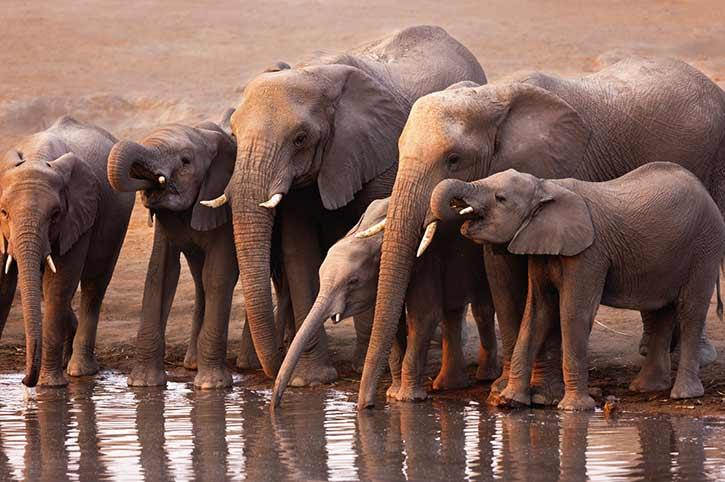 Waterhole, Namibia