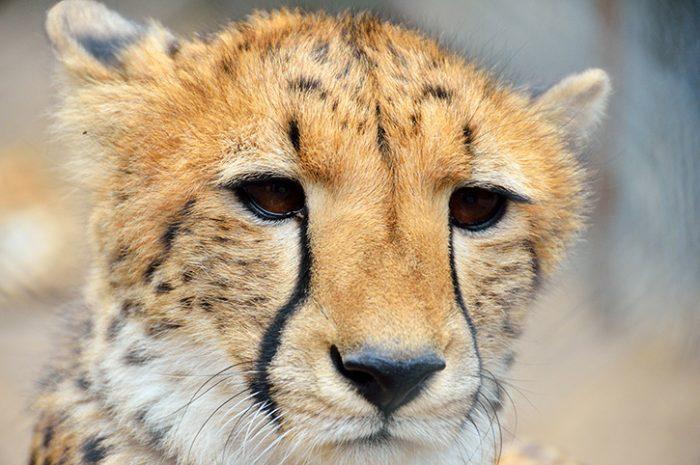 Endangered Wildlife Experience