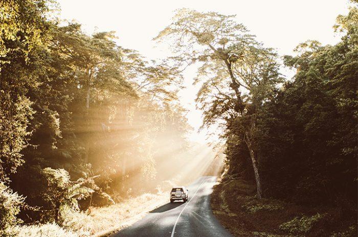 Eungella National Park, MacKay