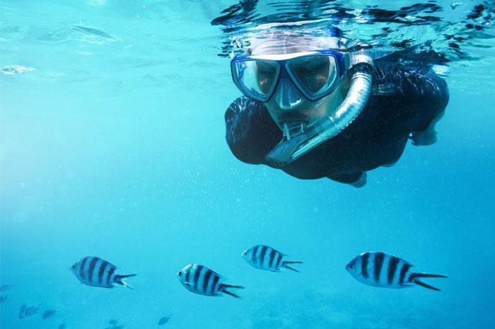 Fish, Mombasa