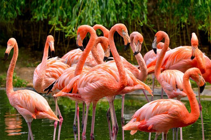 Flamingoes in Everglades National Park