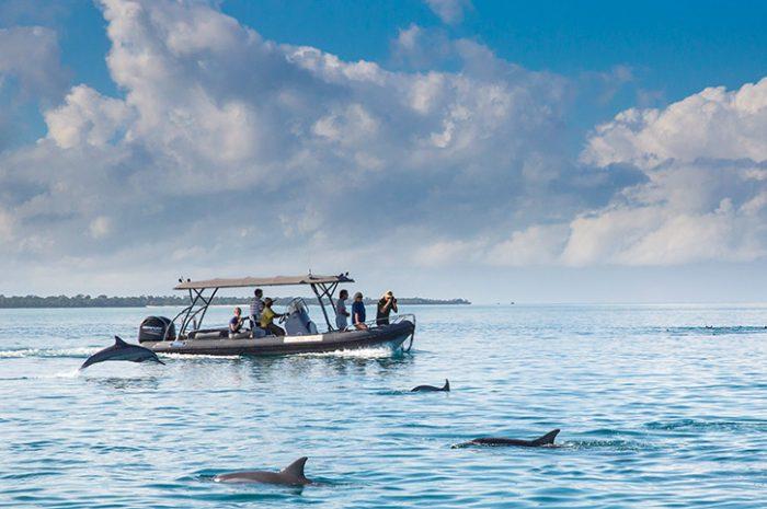 Fundu Lagoon Dolphin Tour