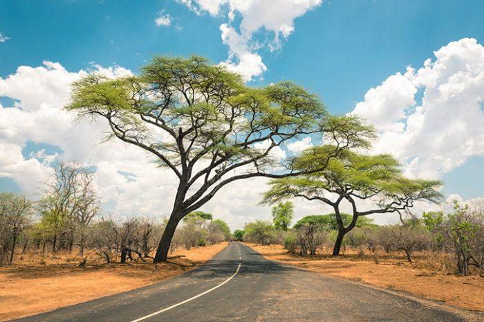 Zambezi Drive, Zimbabwe